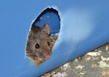 Mouse6cropped