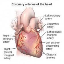Heart Circulation