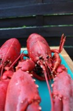 lobster-1206051-m