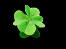 4-leaf-clover-1382594-m