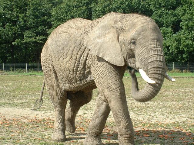 elephant-1389977-640x480