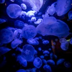 Bioluminescence via Shutterstock