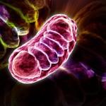 mitochondria via shutterstock