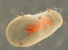 bacteriophage via shutterstock