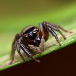 spiders via shutterstock