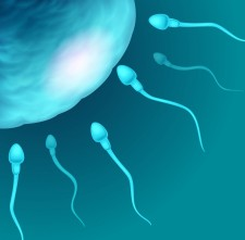 Sperm cell via Shutterstock