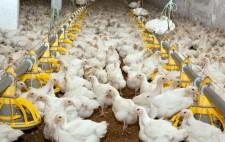 Poultry via Shutterstock