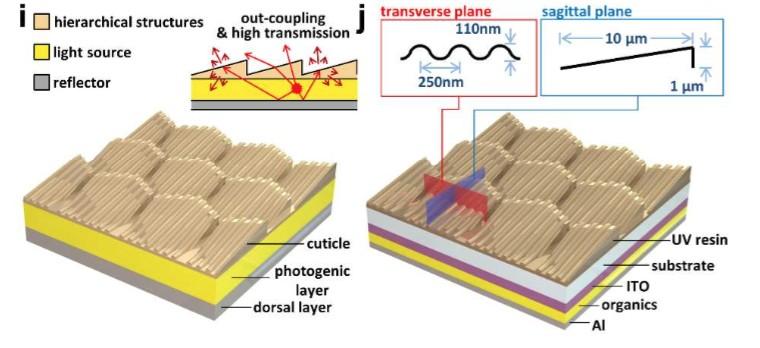 Credit: Jae-Jun Kim et al. Nano Lett. DOI: 10.1021/acs.nanolett.5b05183