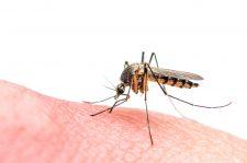 Malaria via Shutterstock