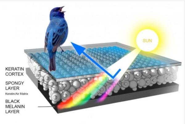 BirdPrism