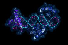 Epigenetics via Shutterstock