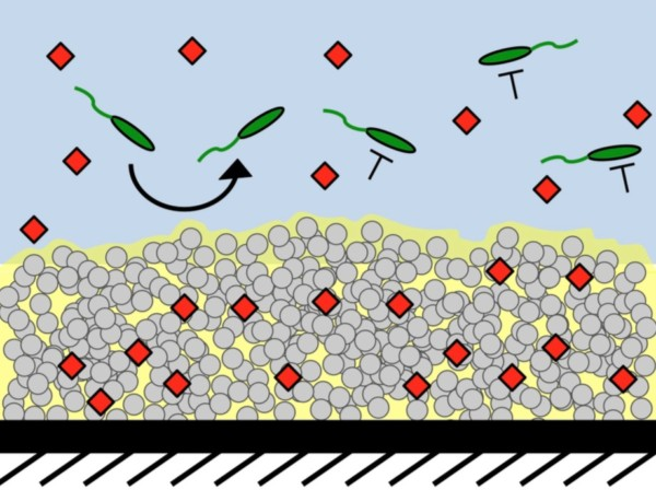 SLIPS containing anti-quorum sensing molecules can block bacterial growth. (Credit: Kratochvil et al., ACS Infect Dis, 2016.)