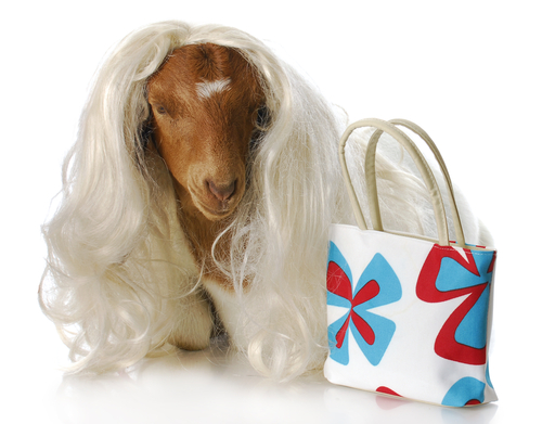Goat purse? (Credit: Shutterstock)